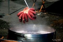 Octopus, la perla gallega (pulpo a feira)