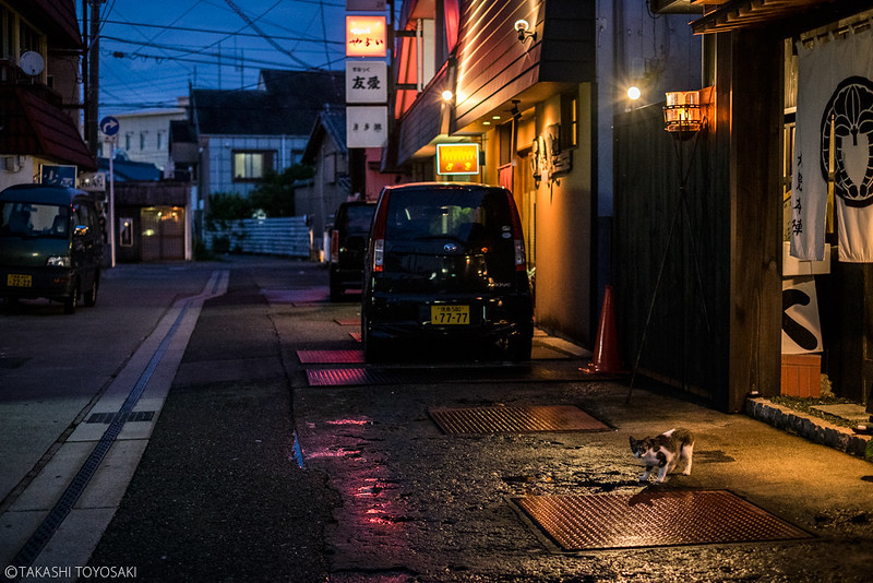 Tokushima Cat Color #237