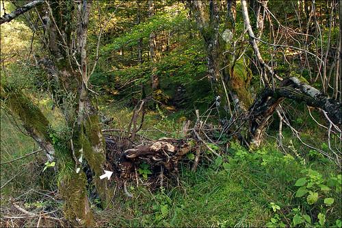 Photo by Amadej Trnkoczy  on Flickr Автор фото: Amadej Trnkoczy (Slovenija)