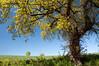 Dunsford summer scene, Devon 9 by chris-parker
