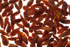 Chili annuum style Pequin or Tepin, Capsicum &#039…