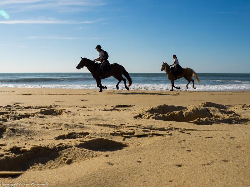 Ballade sur la plage 21471096084_7daeb78287_c