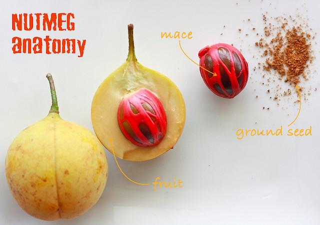 nutmeg anatomy (mace)