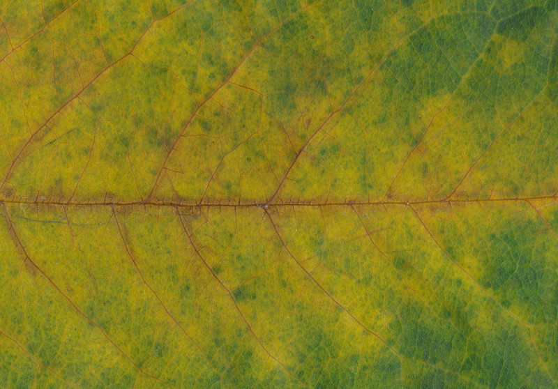 CreativeCommons - Autumn leaves - 2015 Series 1 - 05 by #TexturePalace