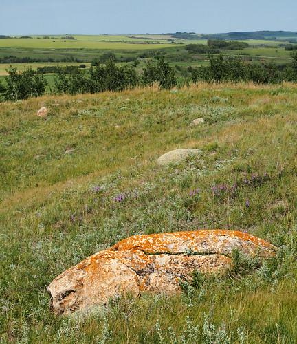 summer grass rock sunny olympus clear vista lichen prairie omd em5