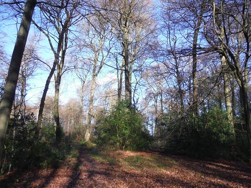 A wintry Lordling Wood, near Swan Bottom