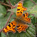 Comma by Roger B.