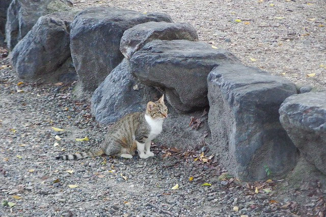 Today's Cat@2016-10-26