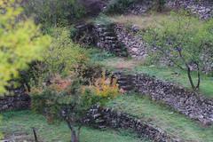 Les belles restanques, Saorge, Alpes-Maritimes, FR