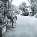 Animal Kingdom - Lonely Rickshaw by Jeff Krause Photography