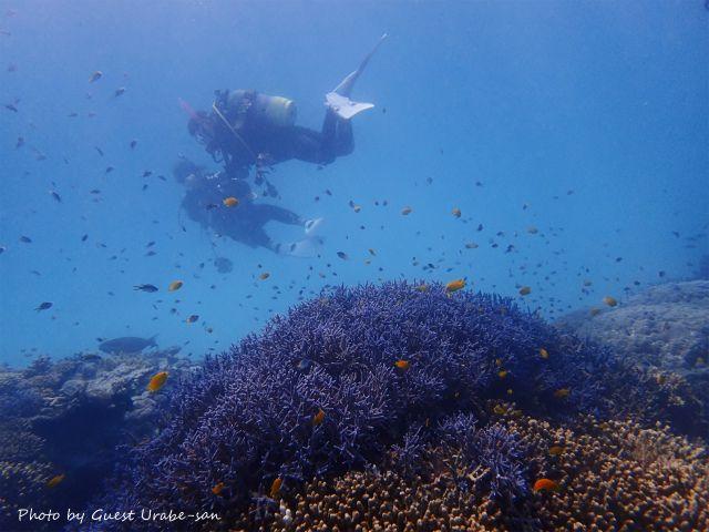 青い珊瑚礁♪