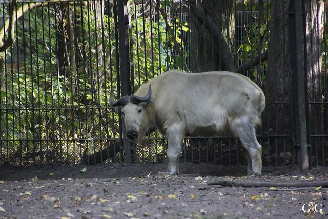 Sonntags-Besuch im Tierpark Friedrichsfelde 04.10.201566