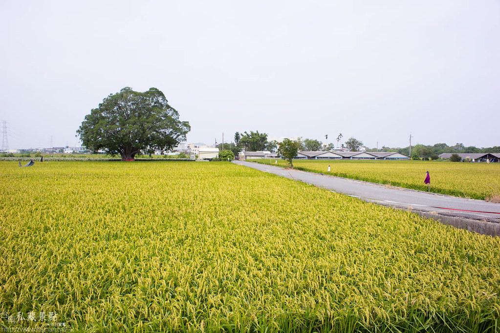 柳營太康社區-太康113 (35)