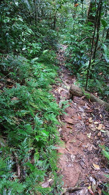 Side trail to Bobbin Bobbin Falls, Mount Bartle Frere