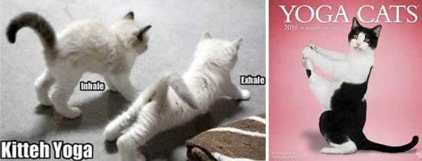 kitten-meme-cat-calendar-10-23-15