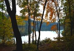 through the trees of Autumn