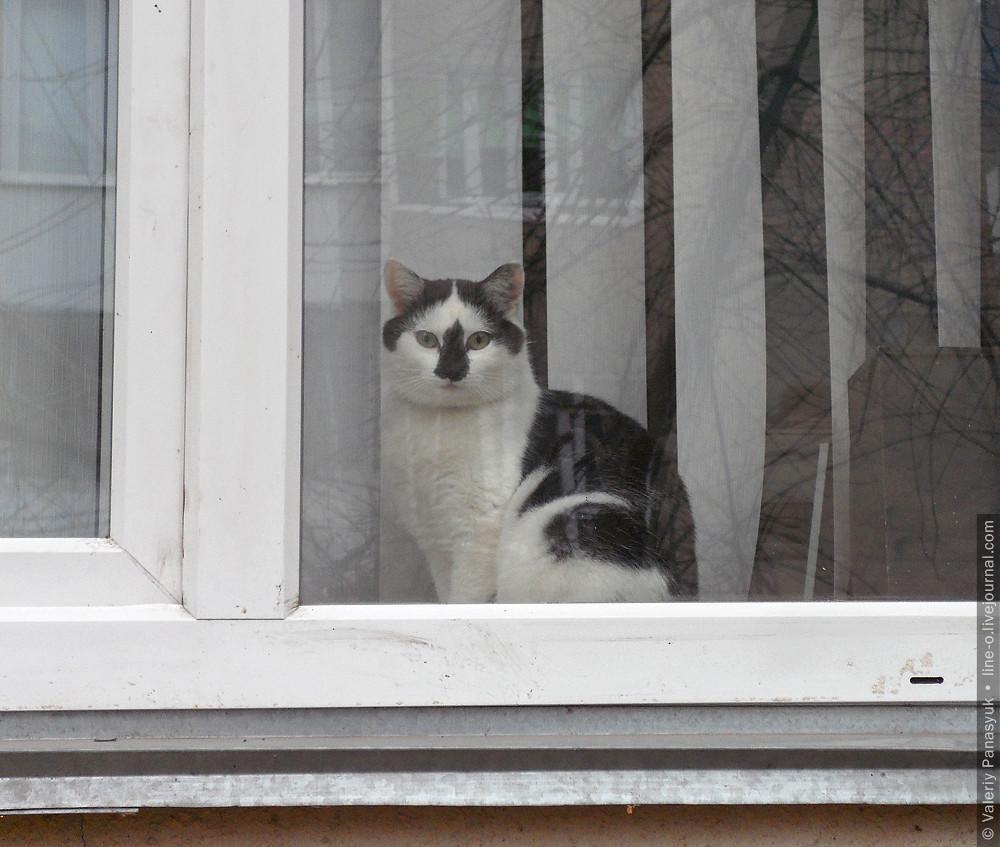 20151111_lutsk_cat_002