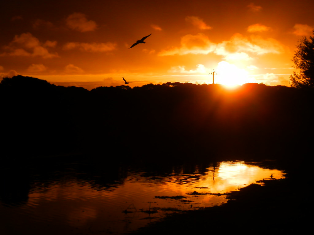 Birds at Sunset, Pub Lake, Robe, Limestone Coast