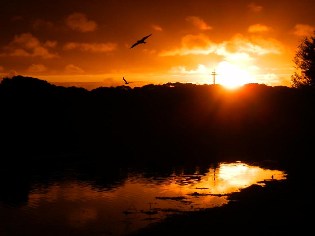 Birds at Sunset, Pub Lake, Robe, Limestone Coast