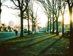 Late Autumn/Long Shadows
