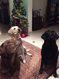 our girls waiting to open their Xmas presents!