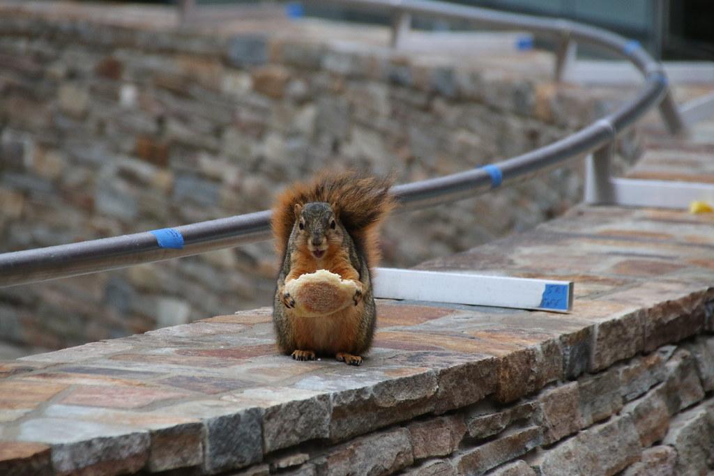 170/365/3092 (November 28, 2016) - Squirrels in Ann Arbor at the University of Michigan (November 28, 2016)