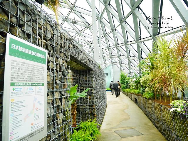 日本東京景點新宿御苑溫室植物 (3)