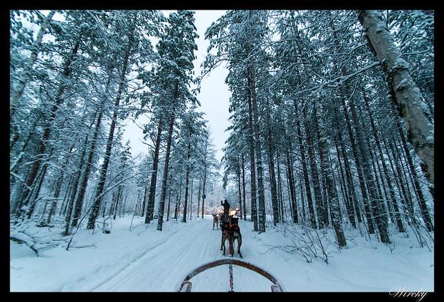 Excursiones Laponia finlandesa invierno - Trineo de huskys