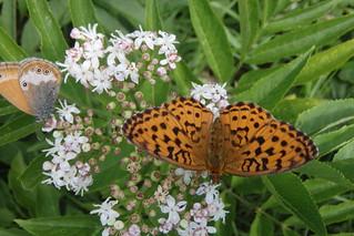 butterfly-ro-bobturner