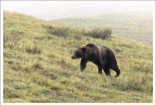 Denali 2015-08-12 2 (Bear)