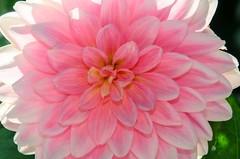 Macro flower cluster