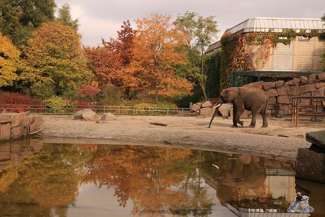 Tierpark Berlin 18.10.2015  0150