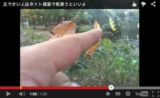 女郎蜘蛛の動画