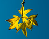 Autumn_Leaves_Project-01