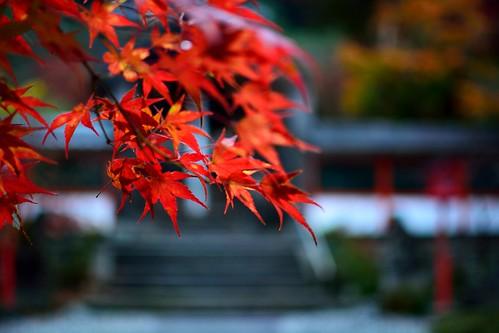 Kuwayama RED
