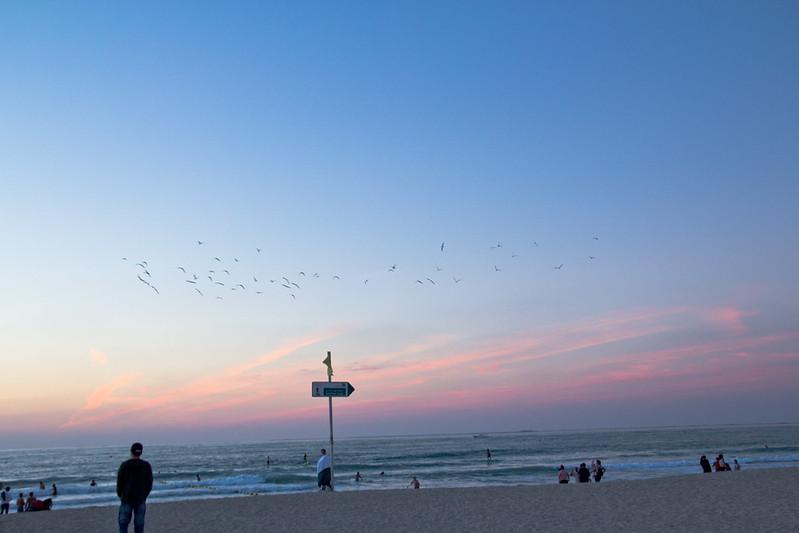 Flight at dusk