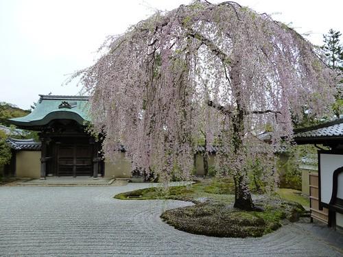kodaji temple garden