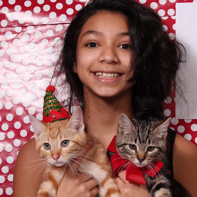 A few of my cuties! #holidays #ANourse #photographer #StandUPCams #photo #cats #kitties #portrait
