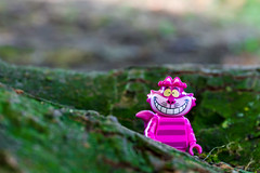 """Cheshire cat - """"If you don't know where you are going, any road will get you there"""""""