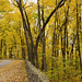 Devil's Lake -Along the Road - Autumn Glow by NikonD3xuser1(Thanks for 1.6 million visits)