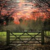 #Ripon 3 - #gate #sunset #field #grass #trees #Yorkshire #England #UnitedKingdom
