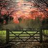 #Ripon 3 - #gate #sunset #field #grass #trees #Yorkshire #England #UnitedKingdom