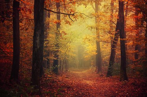 Autumn Walk XLII.