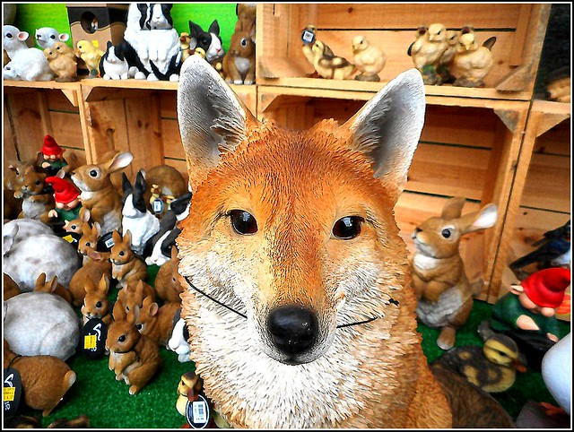 Foxy Figure ..