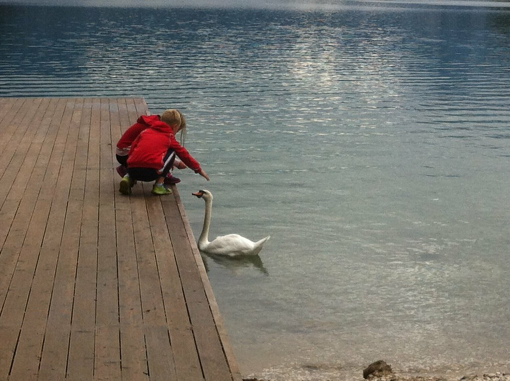 Bled petting the swan