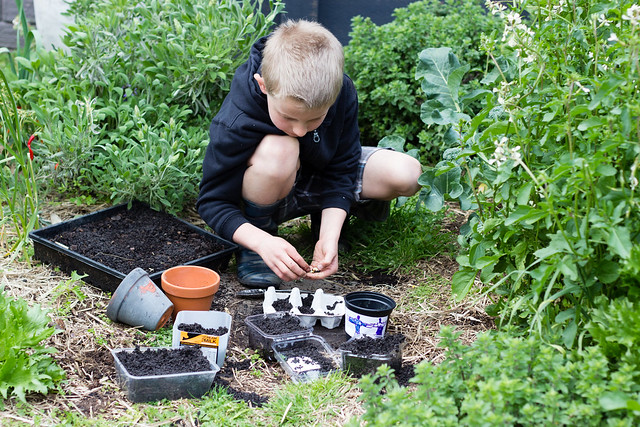 How to raise seedlings Grow vegetables from seed