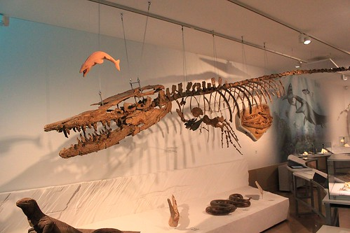 skeleton of sea animal