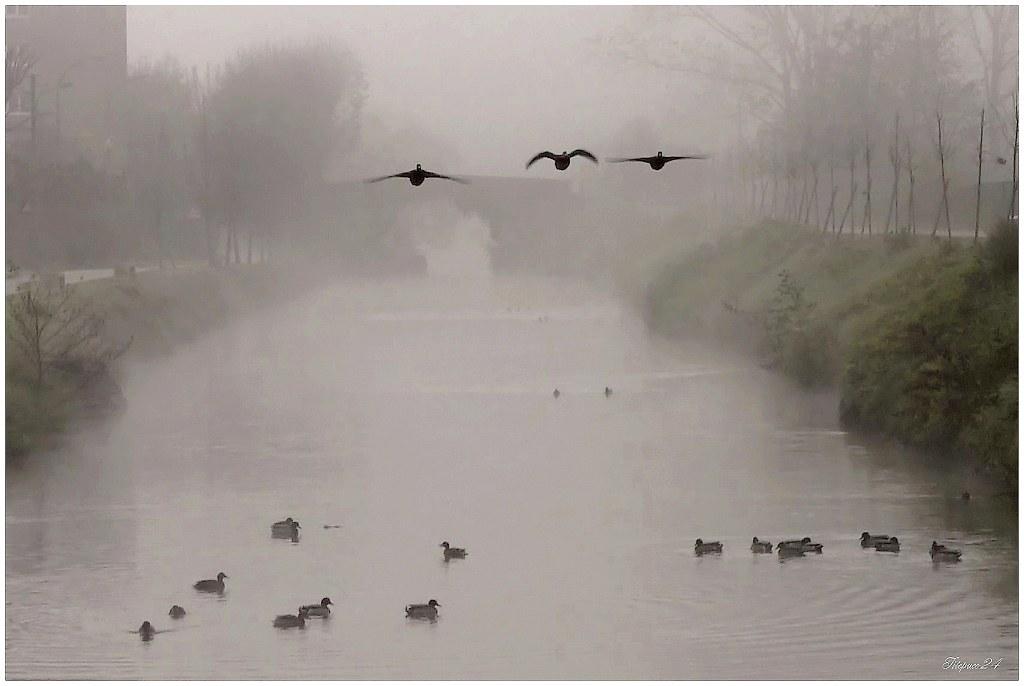 Matin de Brouillard sur le canal 23169803660_0fbef77a16_b