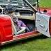 Mustang 65 ou 66 je ne sais plus !-) by pontfire