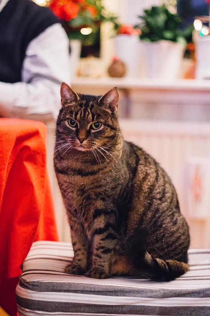 Katten Majsan | Matildigt